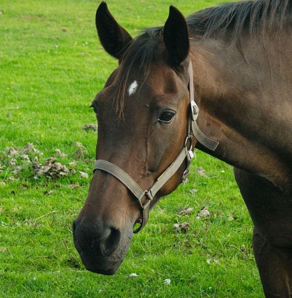 horse-1555274SD