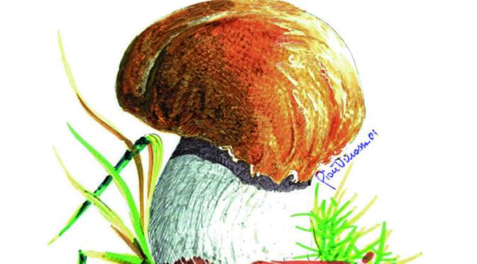 Il fungo al centro della festa, a Giaveno